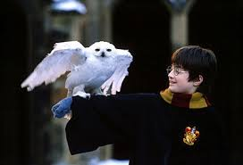 images-10 HARRY POTTER HEDWIG'S THEME