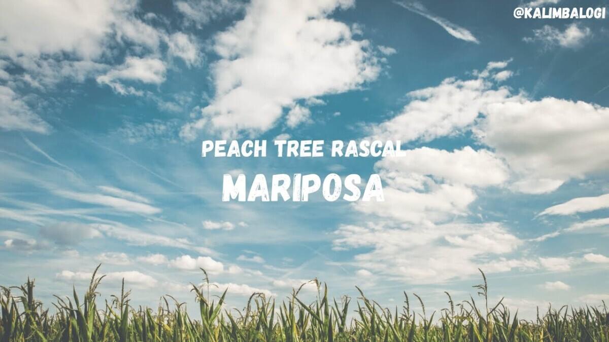 maxresdefault-2020-07-27T210059.492 Mariposa - Peach Tree Rascal