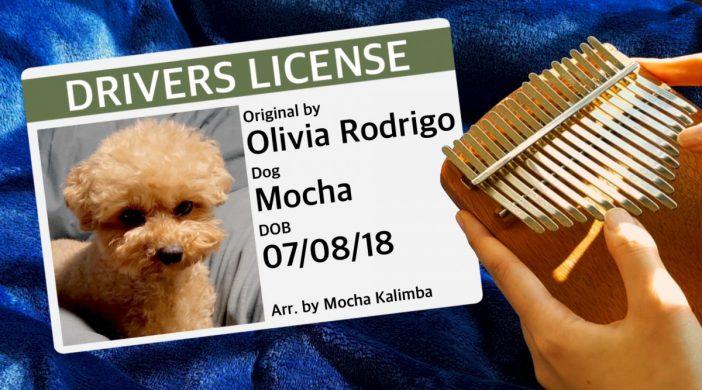 C7D5574A-E2C0-4C38-86D7-90F0A7FD7B08-67a2936c-702x390 Drivers License, Olivia Rodrigo