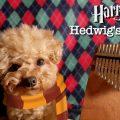 F0DB80CB-5196-46FD-9C30-C3B12604338B-6be082cc-120x120 Harry Potter Hedwig's Theme