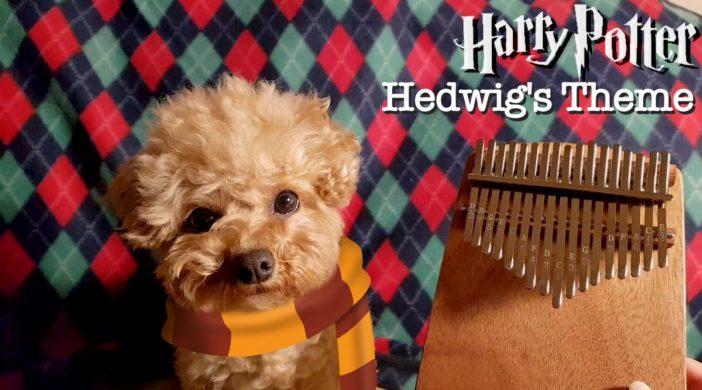 F0DB80CB-5196-46FD-9C30-C3B12604338B-6be082cc-702x390 Harry Potter Hedwig's Theme
