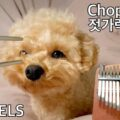 00820063-F027-4919-9823-85A90DADC77A-84af8e2c-120x120 Chopsticks, Celebrated Chop Waltz