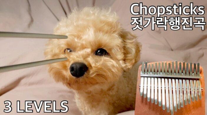 00820063-F027-4919-9823-85A90DADC77A-84af8e2c-702x390 Chopsticks, Celebrated Chop Waltz